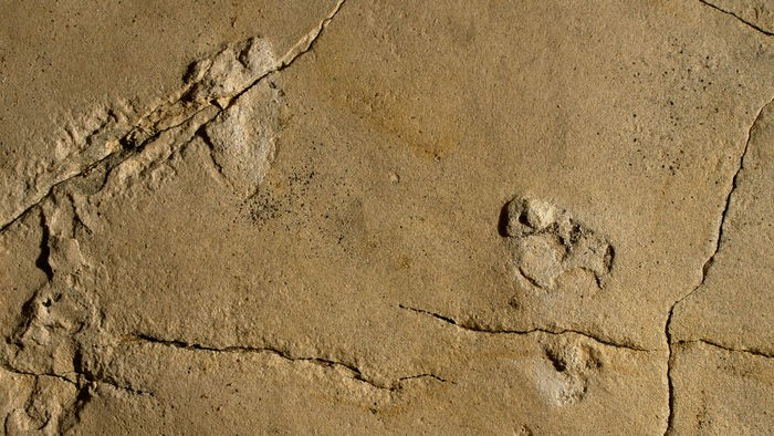 "5.7 million-year-old footprints challenge the ""Out of Africa"" theory"